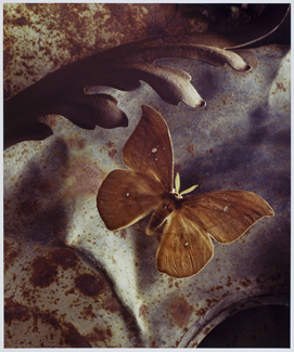 chromogenic photograph,  24 x 20 inches (60.9 x 50.8 cm)